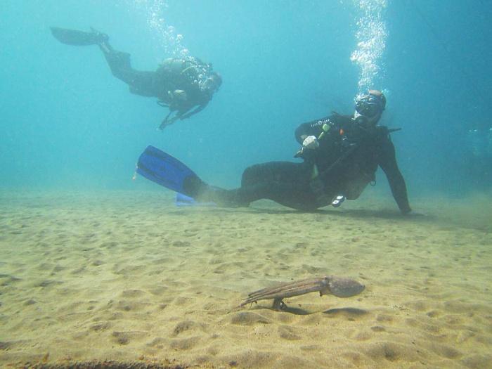ReActivate Greg et un poulpe pendant sa première plongé depuis 6 ans
