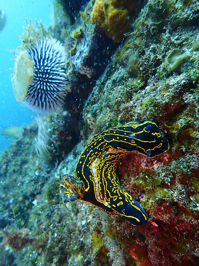 Nudibranch spotted on one of the dive sites in Lanzarote during a PADI open water course